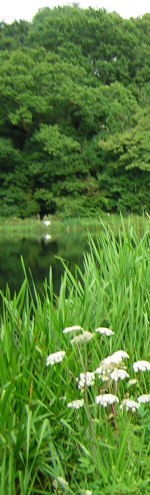 Local Resources for fishing at Chiphall Lake, a Trout Fishery located near Wickham, Hants Hampshire